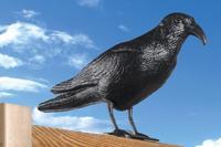 Odpuzovač holubů - havran