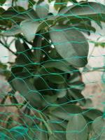Ochranná síť proti ptákům TORO 4x10m