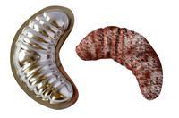 Formičky na cukroví - rohlíčky, malé, 20 ks